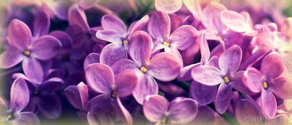Орифлэйм Активная Весна! Последняя 12-ая Неделя!